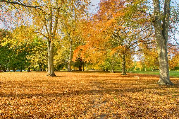 Abington Park in Autumn – Foto
