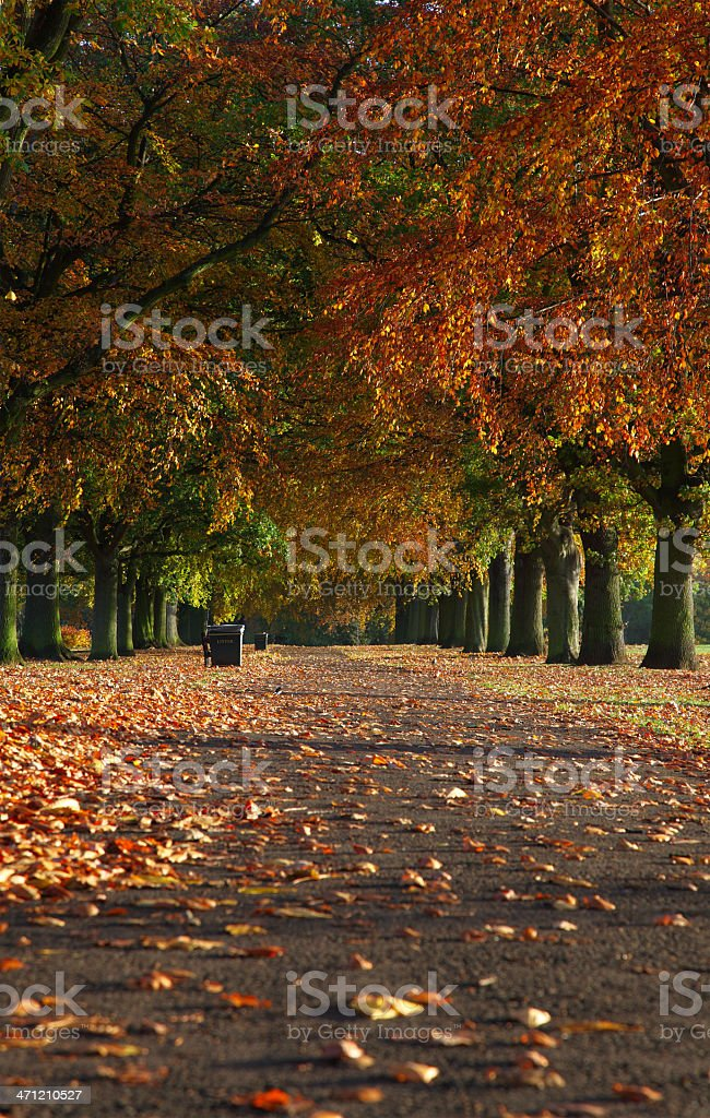 Abington Park Northampton Autumn stock photo