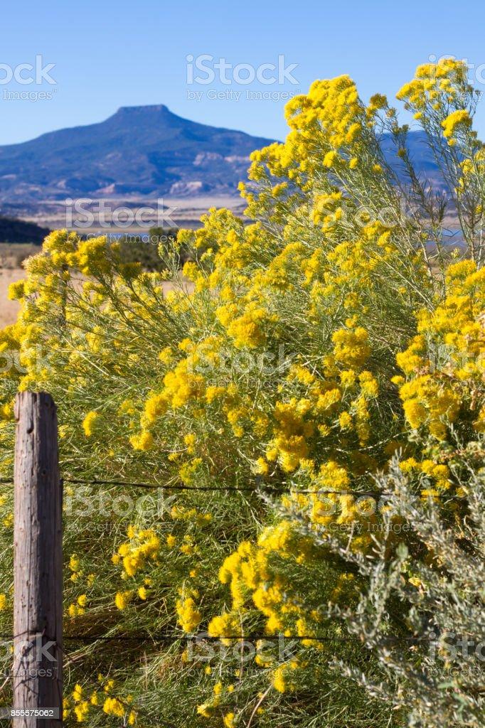 Abiquiu, NM: Cerro Pedernal Mesa and Chamisa/Rabbit Brush stock photo