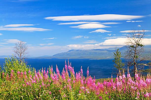 abisko national park, lapland, sweden - norrbotten bildbanksfoton och bilder