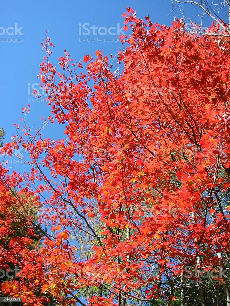 Ablaze-brillanti colori autunnali foto stock royalty-free