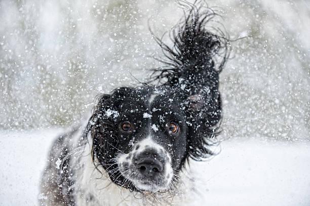 Abominable snowdog picture id169937527?b=1&k=6&m=169937527&s=612x612&w=0&h=7f5qoqognet z7jr i0pd8id0by9rbzo0ueexsdytbc=