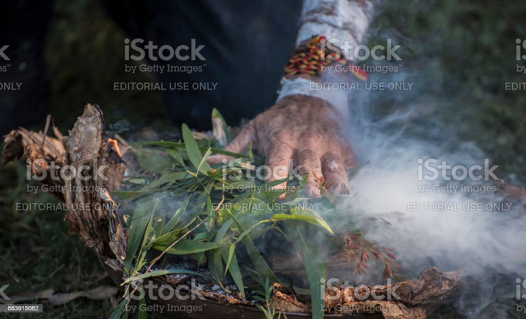 Aboriginal elder's hand places eucalyptus leaves on fire. stock photo