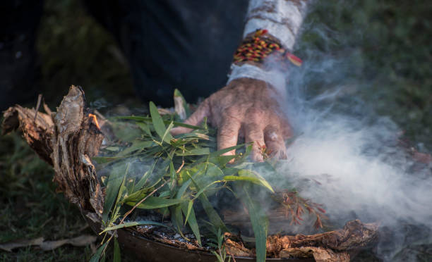 Aboriginal elder's hand places eucalyptus leaves on fire. stock photo