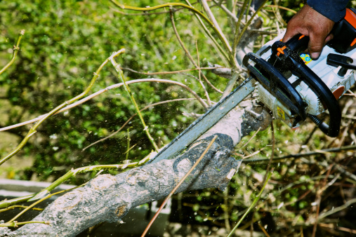 istock Aborist Using Chainsaw on Ash Tree Branch Sawdust Ylying 155389631