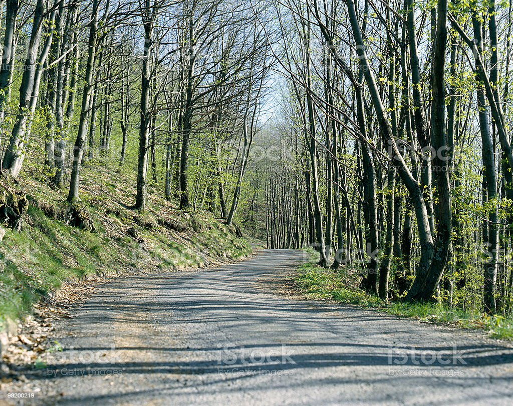 About Beautiful Tuscany: Country Road Trees, Italian Wilderness, Italy royalty-free stock photo