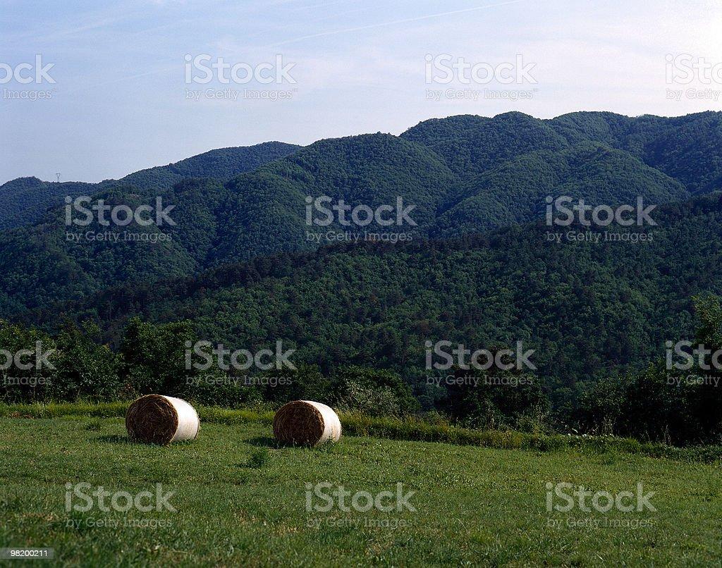 Sulla magnifica Toscana: Bales fieno raccolto paesaggio naturale,, Italia foto stock royalty-free