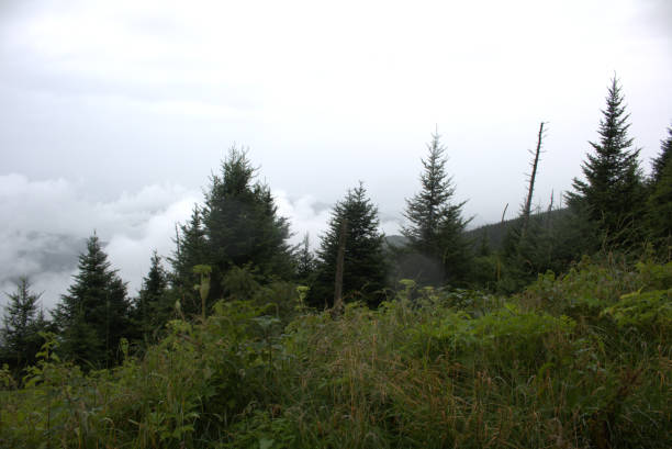 Above the clouds at Clingmans Dome, Tennessee stock photo