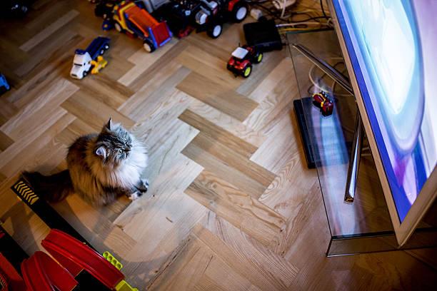 Above view of a domestic cat watching tv picture id526822232?b=1&k=6&m=526822232&s=612x612&w=0&h=kqut0jbvot9fevcihocknubvwbzwc5ax9 m bapzpvs=