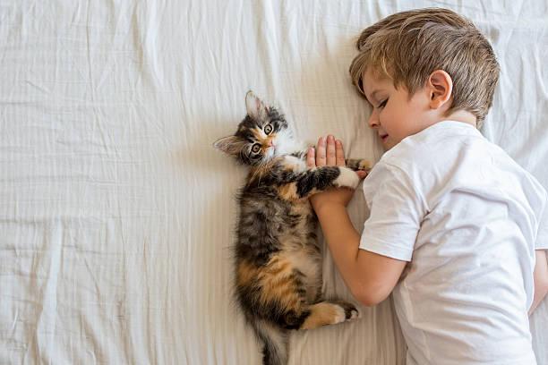 Above view of kitten and kid lying on the bed picture id615501238?b=1&k=6&m=615501238&s=612x612&w=0&h=jnw6lqpnqeq5ok6wmhtcnd m0xzedrl3bxjenzbg9 4=