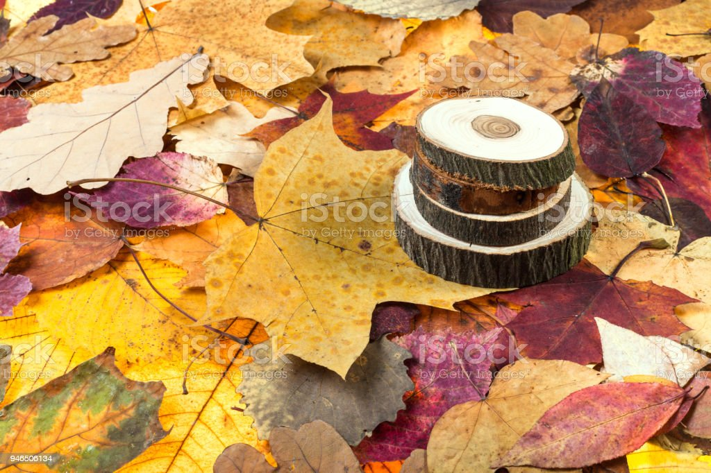 above view of sawed woods on autumn leaves stock photo