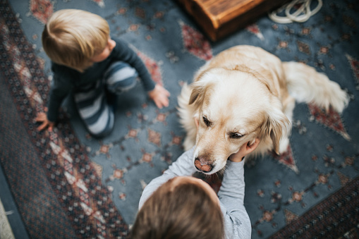 High angle view of small siblings cuddling their golden retriever on carpet at home. Focus is on dog.