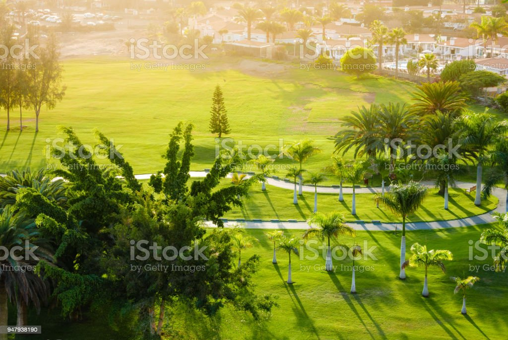Above view on palm trees on green golf court. stock photo