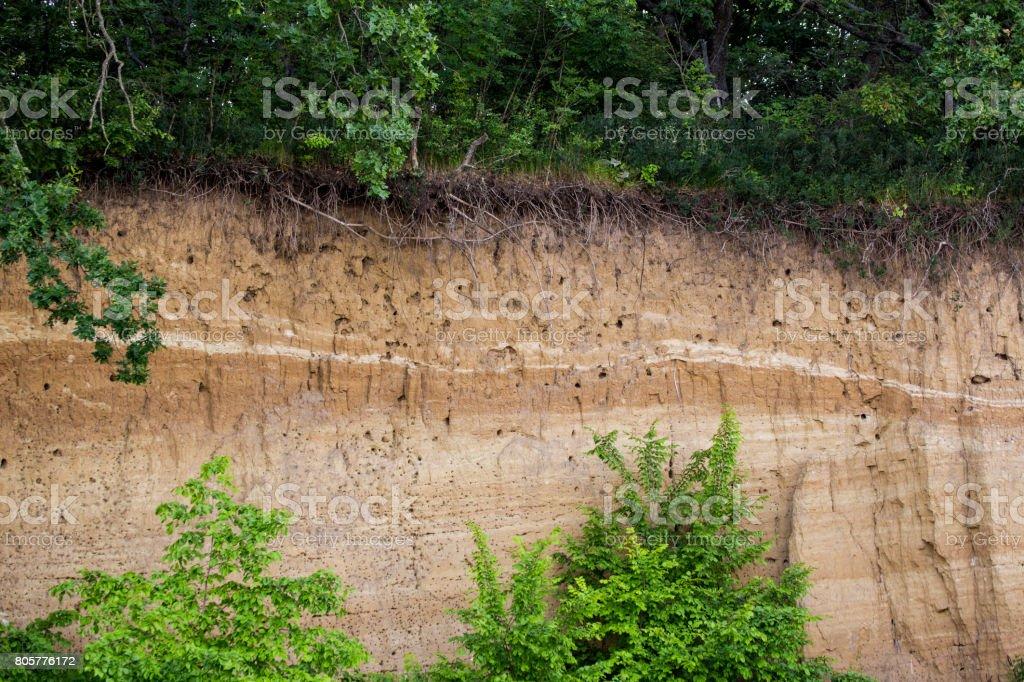 Steilen Ufer Eines Flusses Layern Von Pflanzen Erde Sand Lehm Und