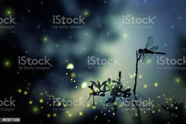 Abstract and magical image of dragonfly silhouette and firefly flying picture id897671338?b=1&k=6&m=897671338&s=612x612&h=funvxpoc3ketxjqp845nhvuctpffdwtwjtqqak9g0ok=