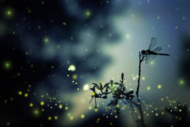 Abstract and magical image of dragonfly silhouette and firefly flying picture id897671338?b=1&k=6&m=897671338&s=612x612&w=0&h=7xsvl 4uplgksriltzzzgai2j tbyu0uimmtu3rfao0=