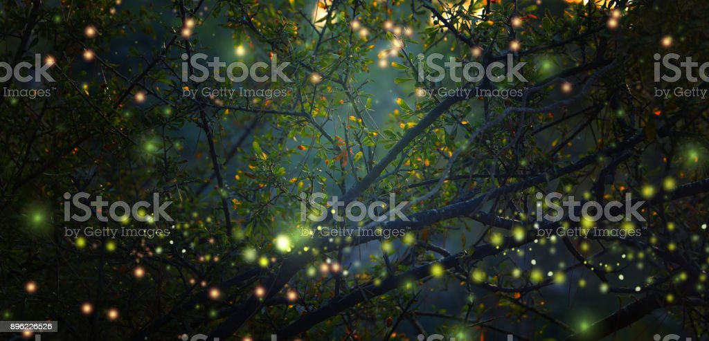 Abstract and magical image of Firefly flying in the night forest. Fairy tale concept. stock photo