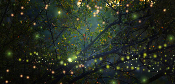 abstract and magical image of firefly flying in the night forest. fairy tale concept. - ethereal stock photos and pictures