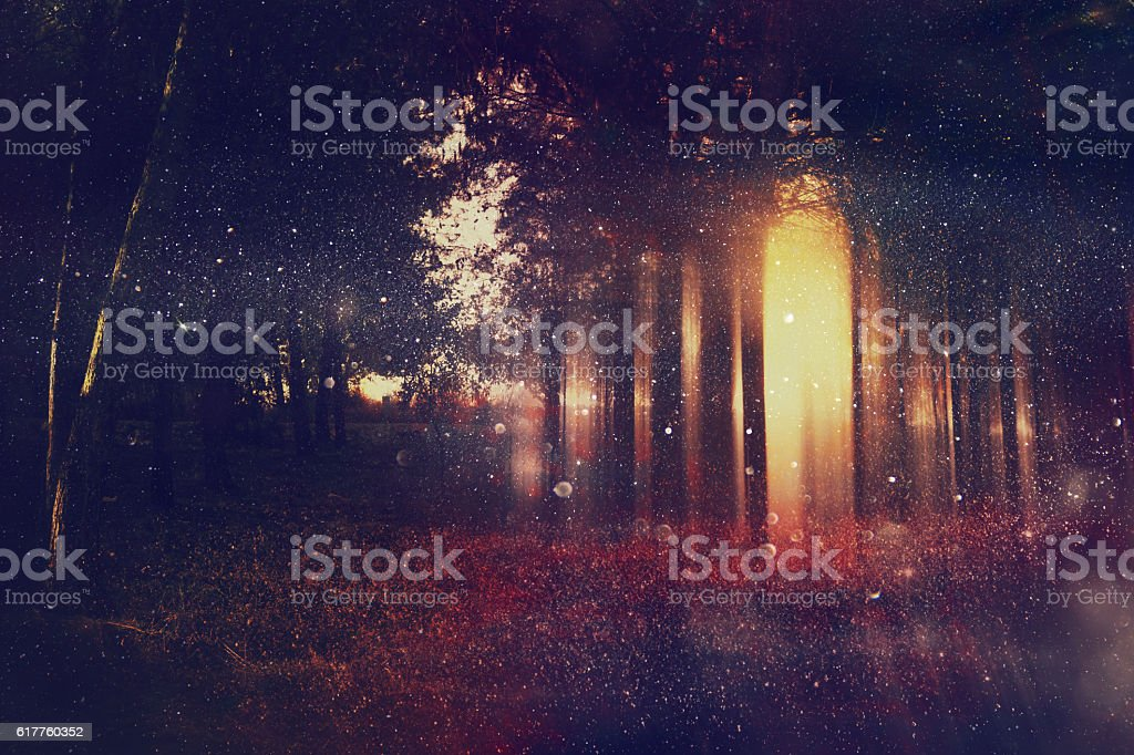 Abstract and mysterious background of blurred forest stock photo