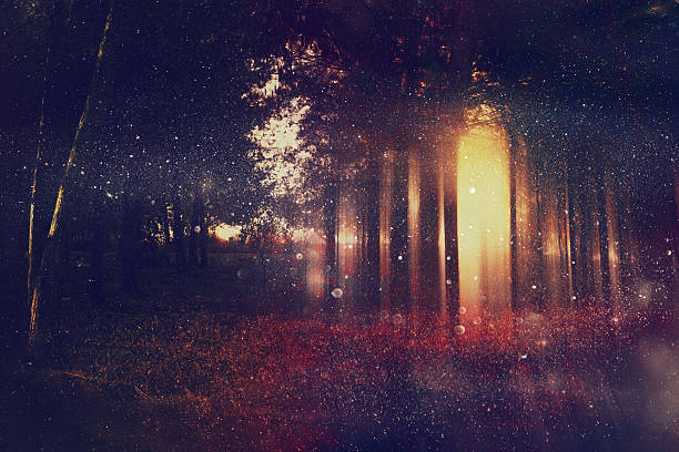abstract and mysterious background of blurred forest - dreamlike stock photos and pictures