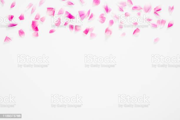 Abstract anniversary background beauty blog blooming blossom bud card picture id1159373788?b=1&k=6&m=1159373788&s=612x612&h=w1mkt3zpcgt4tzff7evhl6ei9pq0wx gdfzlwpucise=