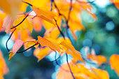 istock Abstract autumn background 1268571124