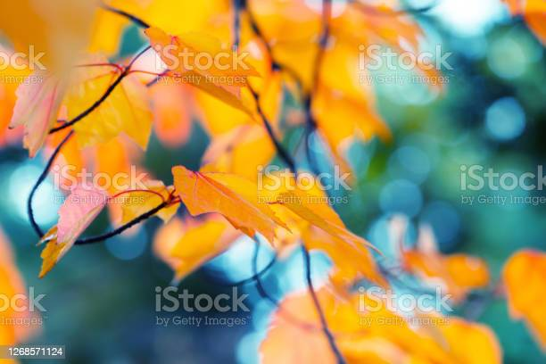 Photo of Abstract autumn background
