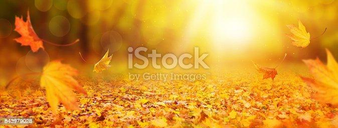 istock Abstract autumn background 843979028