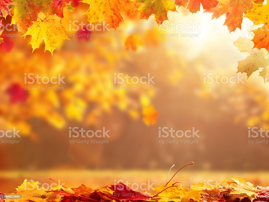 abstract autumn background with copyspace デフォーカスのストック