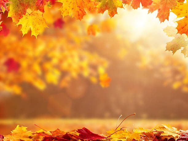 Abstract autumn background with copyspace ストックフォト