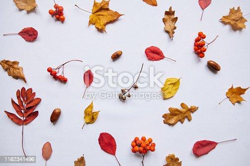 istock Abstract autumn composition. 1162341496