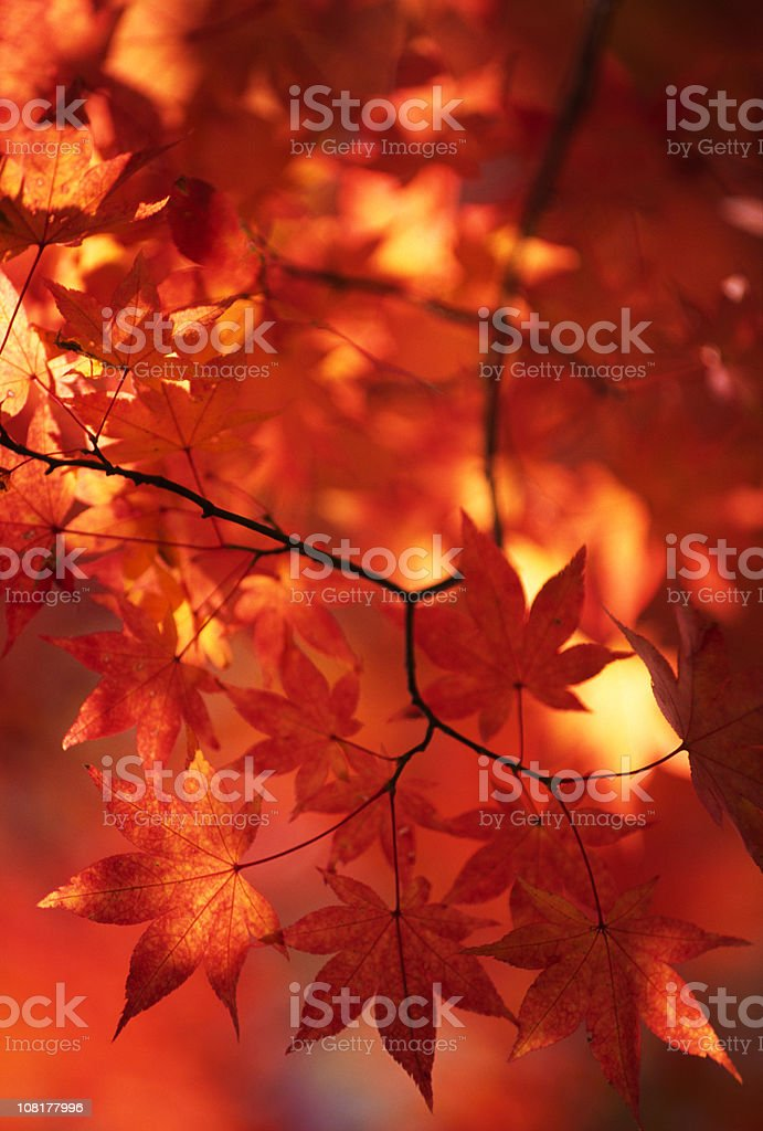 Abstract autumn leaves stock photo