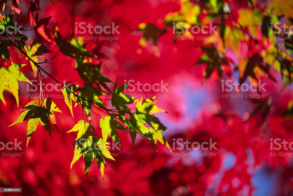 Abstract autumn leaves royalty-free stock photo