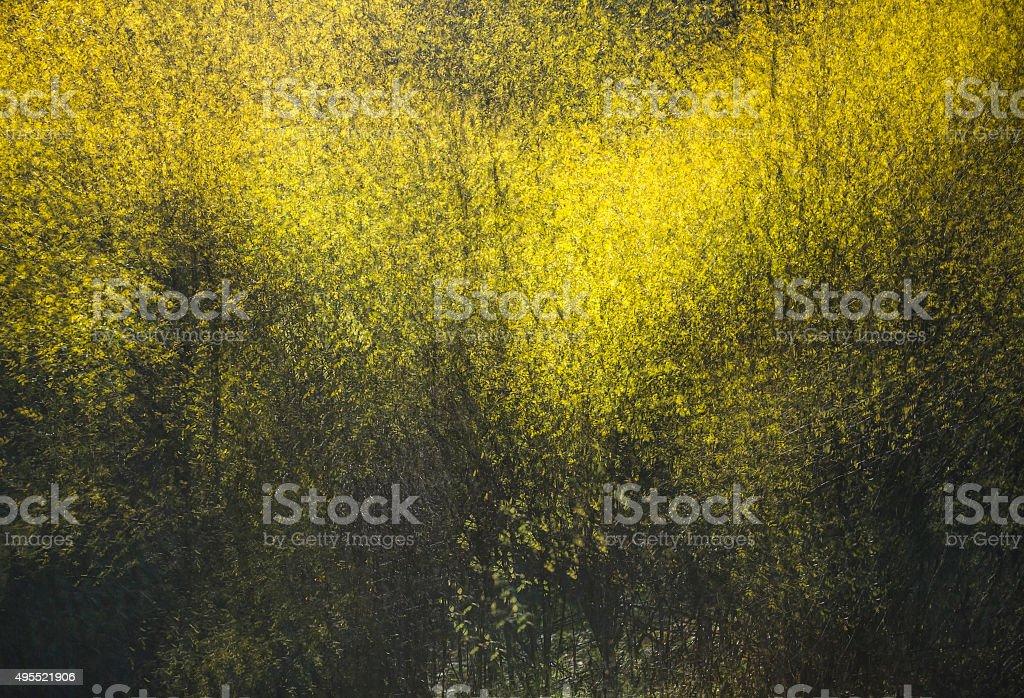 Abstrakt Herbst – Foto