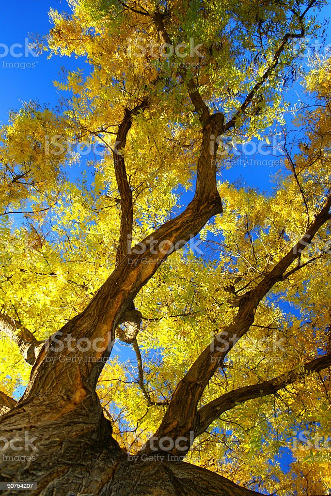 abstract autumn royalty-free stock photo
