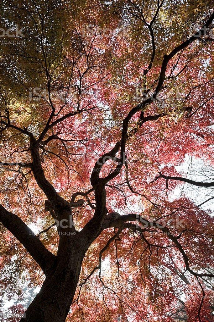 Abstract Autumn Tree stock photo