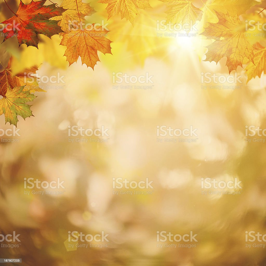 Abstract autumnal backgrounds for your design stock photo