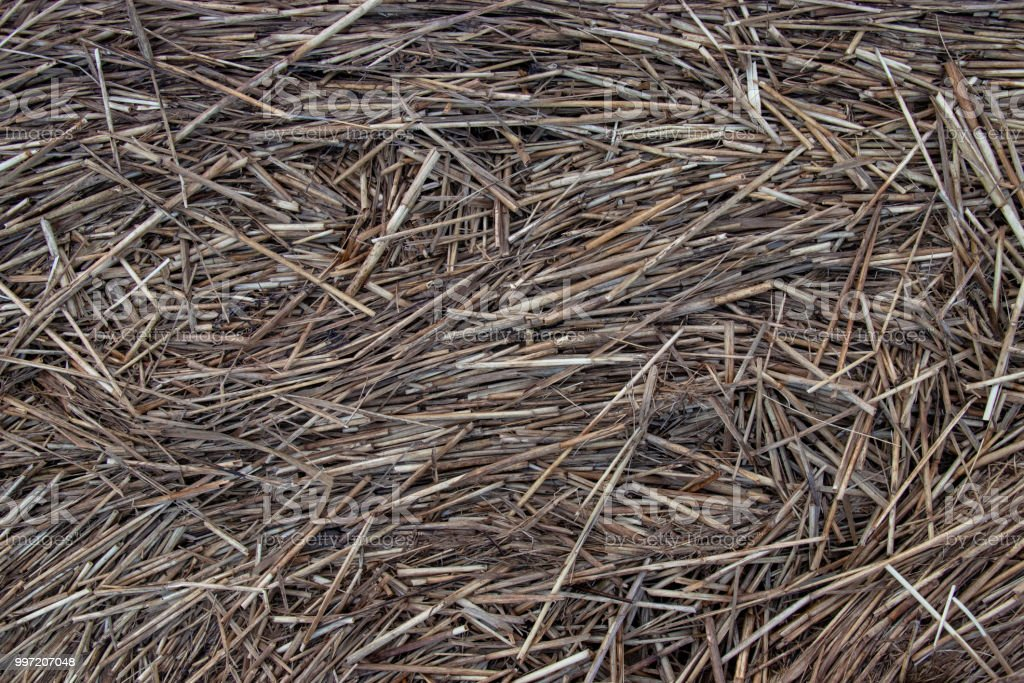 Abstract background, brown, grass stock photo