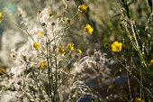 summer meadow at sunrise in sun beams