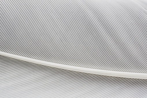 abstract background macro image of  White Feather