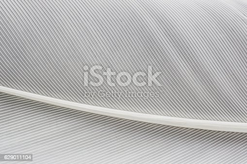 istock abstract background macro image of  White Feather 629011104