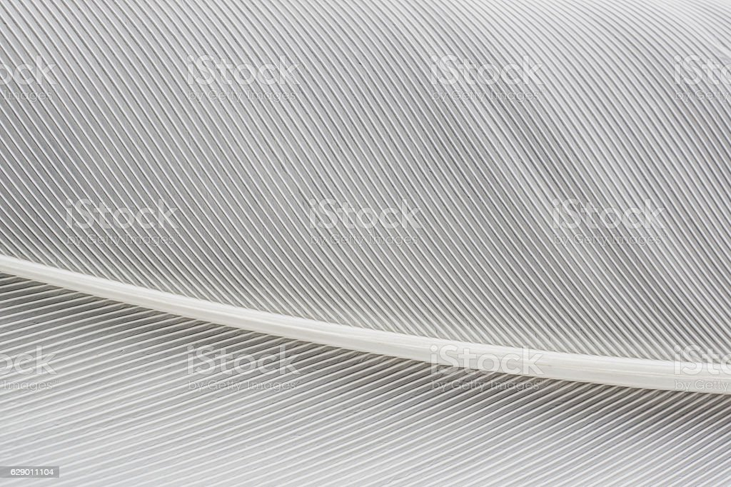 abstract background macro image of  White Feather stock photo