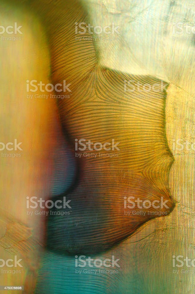 Abstract background micrograph of trachea of a crane fly. stock photo