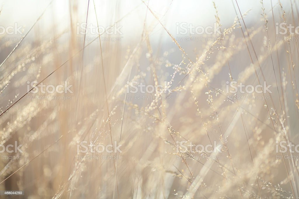 Abstract background: nature autumn grass stock photo