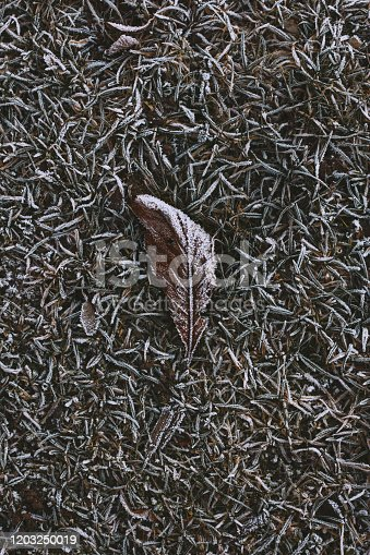 625881376 istock photo Abstract background of dry autumn leaf at winter. Hoarfrost on the leaf, atmospheric photo. Author processing, film effect, selective focus 1203250019