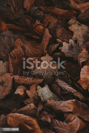 625881376 istock photo Abstract background of dry autumn leaves at winter. Hoarfrost on the leaves, atmospheric photo. Author processing, film effect, selective focus 1203249959