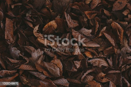 625881376 istock photo Abstract background of dry autumn leaves at winter. Hoarfrost on the leaves, atmospheric photo. Author processing, film effect, selective focus 1203249970