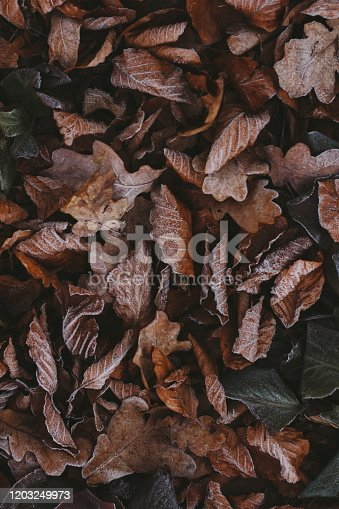625881376 istock photo Abstract background of dry autumn leaves at winter. Hoarfrost on the leaves, atmospheric photo. Author processing, film effect, selective focus 1203249973