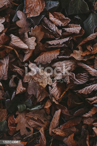 625881376 istock photo Abstract background of dry autumn leaves at winter. Hoarfrost on the leaves, atmospheric photo. Author processing, film effect, selective focus 1203249981