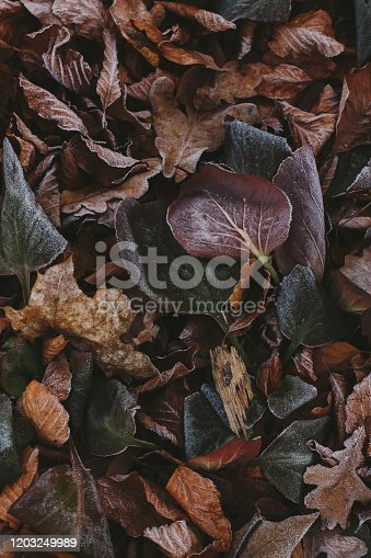 625881376 istock photo Abstract background of dry autumn leaves at winter. Hoarfrost on the leaves, atmospheric photo. Author processing, film effect, selective focus 1203249989